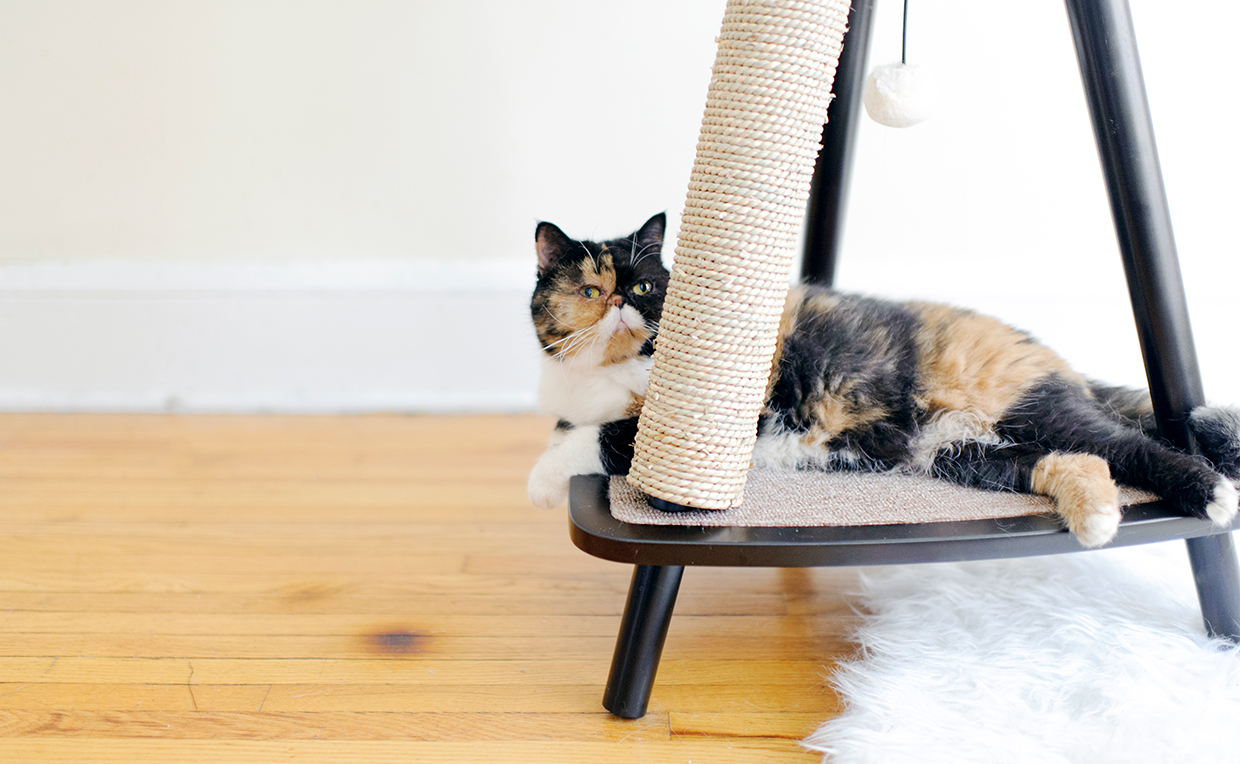 Modern cat tower, cat furniture, living room