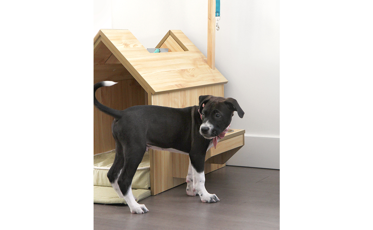 Inside dog house, dog bed, puppy, pet furniture